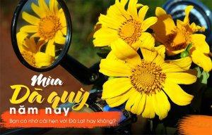 Hoa Dã quỳ đang bung lụa – Các bạn nên đi check in ngay nào