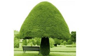 Những lùm cây hình thù kỳ lạ như đến từ thế giới khác (P.1)