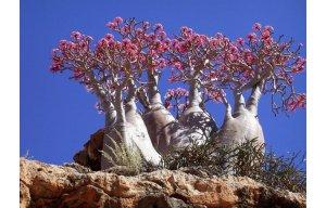 Những lùm cây hình thù kỳ lạ như đến từ thế giới khác (P.2)
