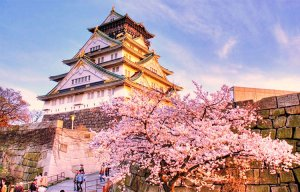 Khác biệt giữa văn hóa Mỹ và Nhật như thế nào( Phần 1 )