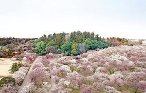 Ibaraki - điểm đến ở Nhật Bản 4 mùa không chán (P.1)