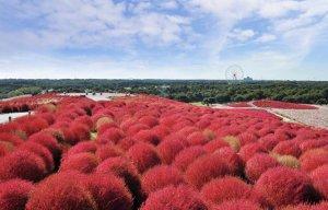 Ibaraki - điểm đến ở Nhật Bản 4 mùa không chán (P.3)