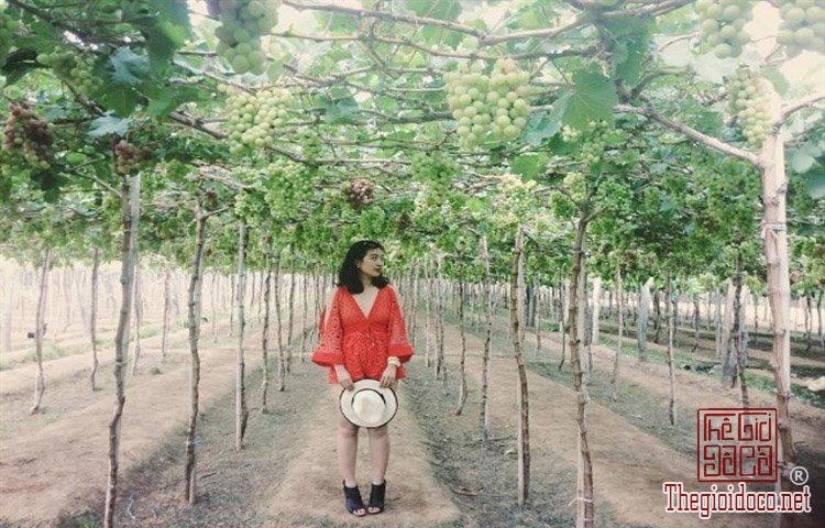 Dao-Binh-Hung (29).jpg