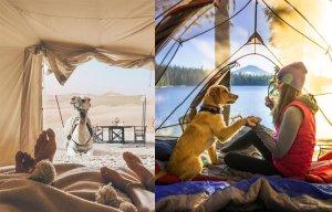 Thiên nhiên kỳ thú qua khung lều trại (P.2)