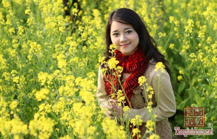 Hoa-Cai-Vang (4).jpg