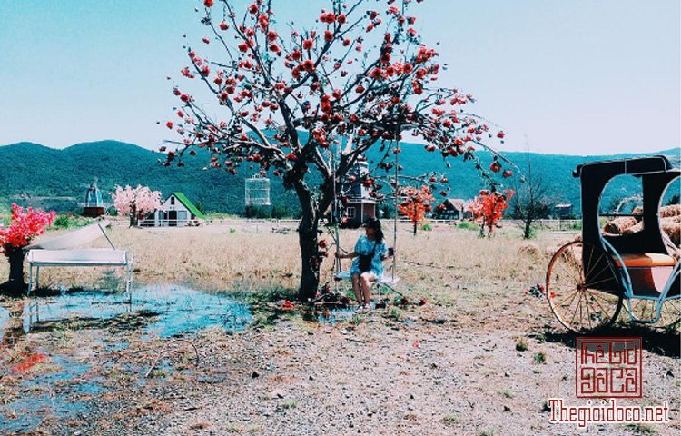 Da-Nang-Du-Lich (13).jpg