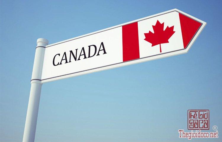 Canada-du-hoc (6).jpg