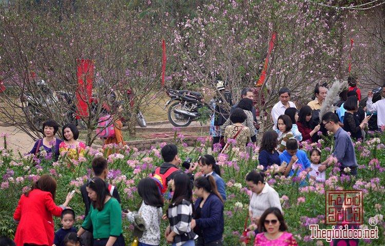 Vườn hoa đào làng Nhật Tân (6).jpg