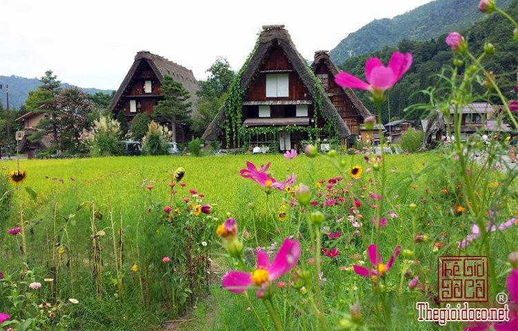 Làng cổ Shirakawa-go (9).jpg