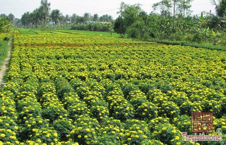 làng hoa kiểng Cái Mơn (1).jpg