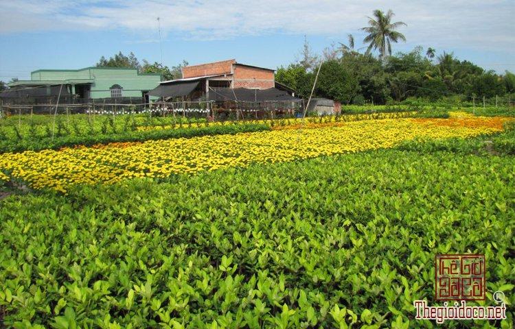 làng hoa kiểng Cái Mơn (3).jpg