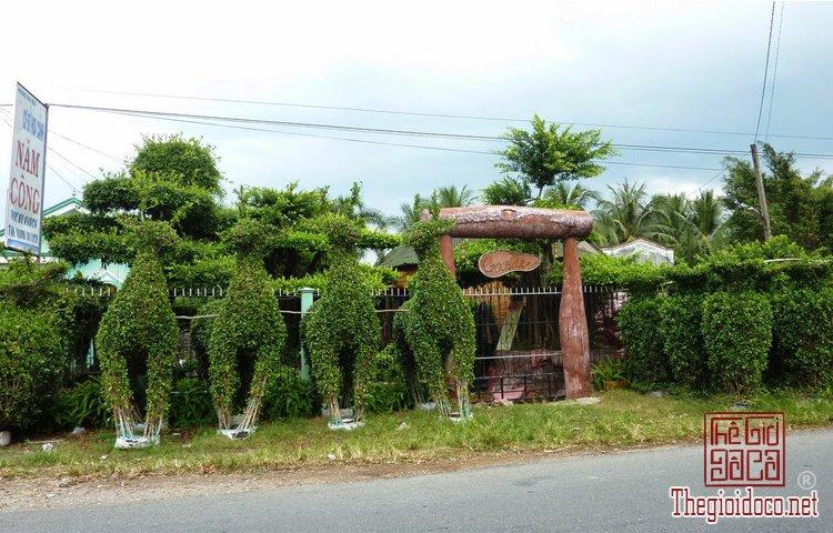 làng hoa kiểng Cái Mơn (8).jpg