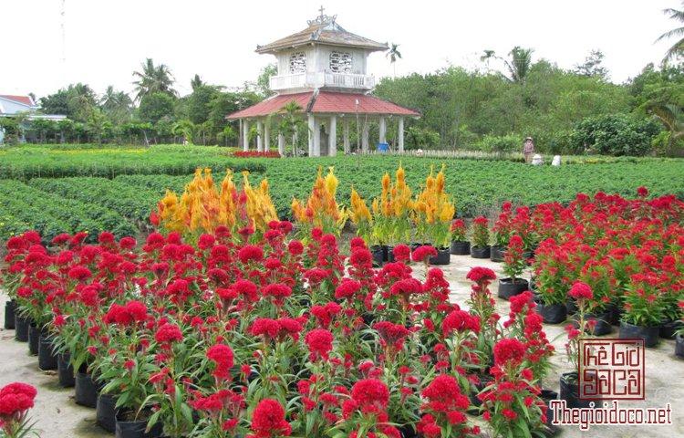 làng hoa kiểng Cái Mơn (15).jpg