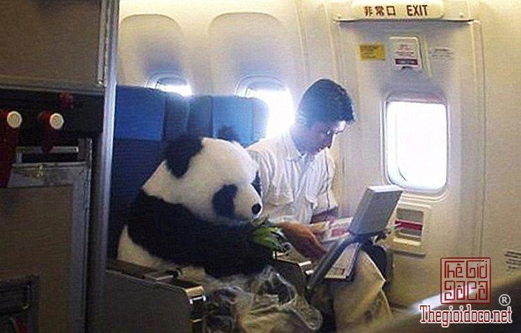 Những vị khách bá đạo trên máy bay (11).jpg