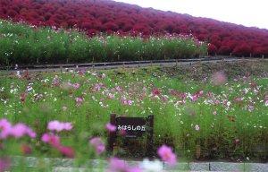Hàng triệu cây cỏ đổi màu khi vào thu