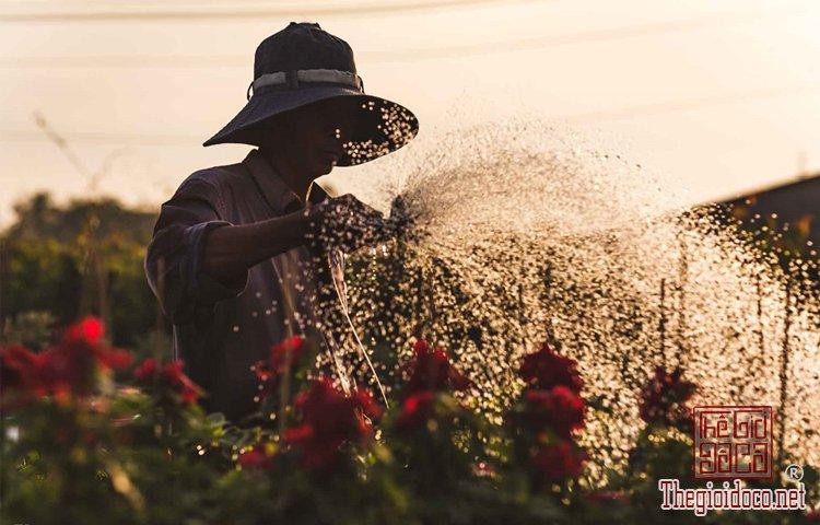 Làng hoa Tân Quy Đông (9).jpg