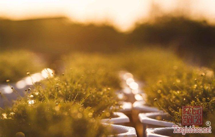 Làng hoa Tân Quy Đông (10).jpg