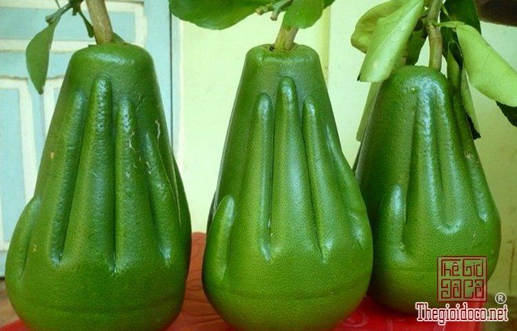 Những loại trái cây độc lạ (2).jpg