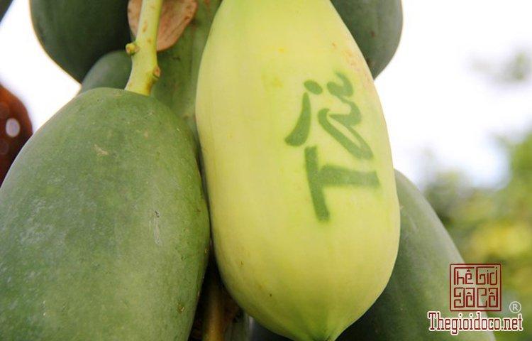Những loại trái cây độc lạ (4).jpg