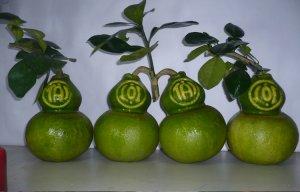 Những loại trái cây độc lạ (7).jpg