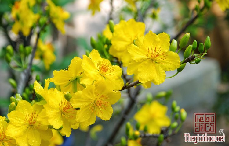 Phong Thủy - Những Loại Hoa Nên Cấm Trong Ngày Tết Để Tăng Tài Lộc (1).jpg