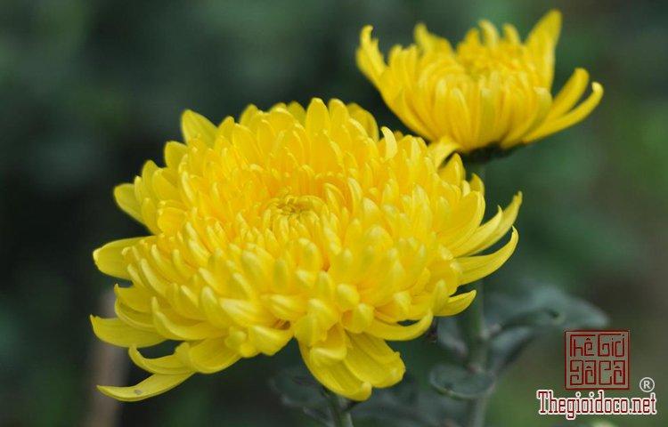 Phong Thủy - Những Loại Hoa Nên Cấm Trong Ngày Tết Để Tăng Tài Lộc (3).jpg