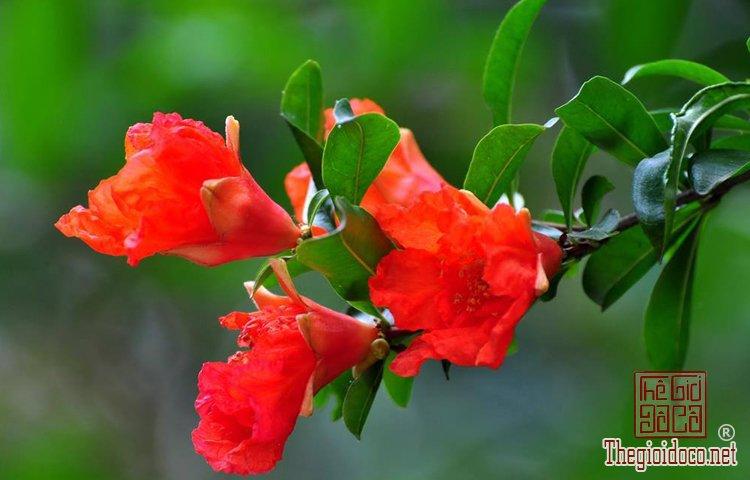 Phong Thủy - Những Loại Hoa Nên Cấm Trong Ngày Tết Để Tăng Tài Lộc (4).jpg