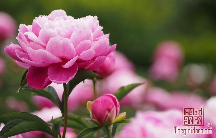 Phong Thủy - Những Loại Hoa Nên Cấm Trong Ngày Tết Để Tăng Tài Lộc (6).jpg