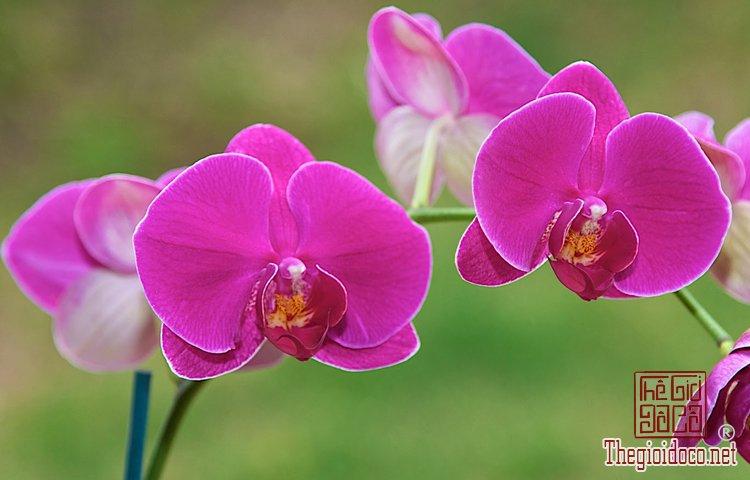 Phong Thủy - Những Loại Hoa Nên Cấm Trong Ngày Tết Để Tăng Tài Lộc (9).jpg
