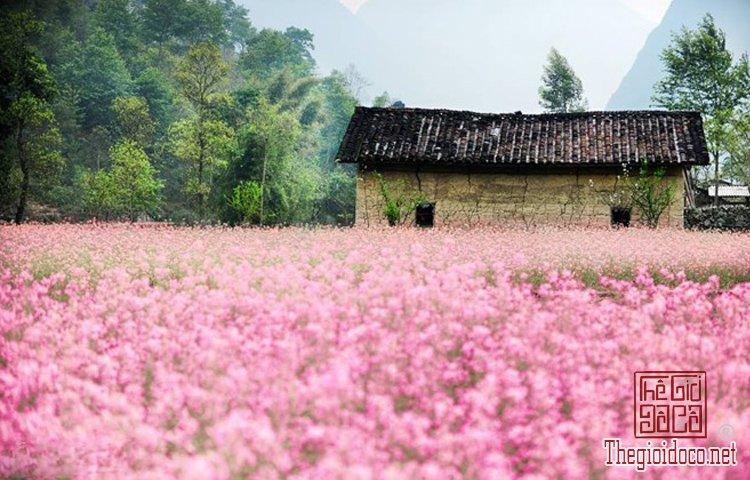Làng hoa Nhật Tân, Hà Giang, Mộc Châu, Làng Nhật Tân, Hưng Yên, Sa Đéc (2).jpg