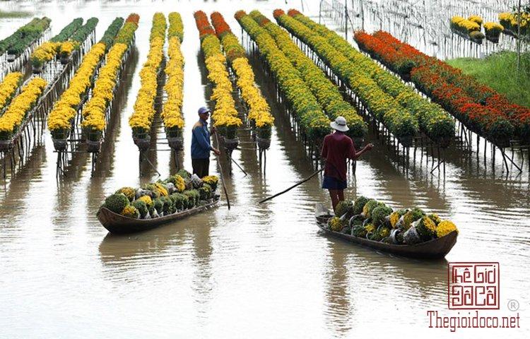Làng hoa Nhật Tân, Hà Giang, Mộc Châu, Làng Nhật Tân, Hưng Yên, Sa Đéc (14).jpg