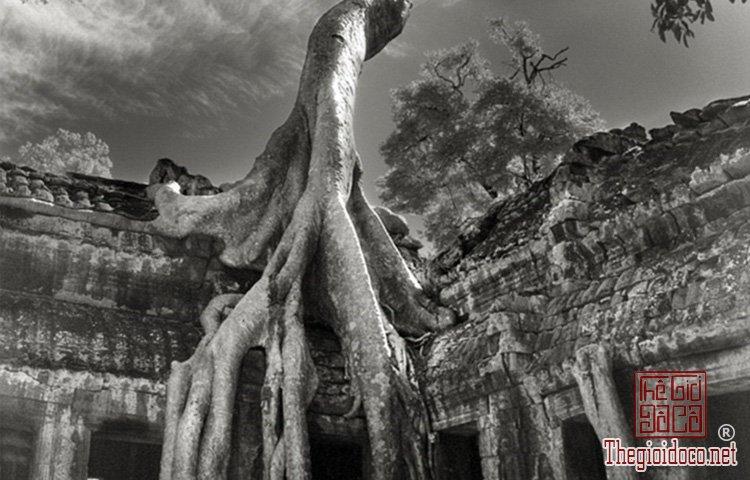 Cây già nhất thế giới (11).jpg