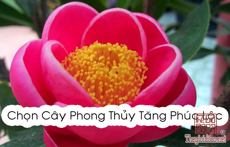 Phong Thủy - Chọn cây phong thủy tăng phúc lộc cho 12 chòm sao  (7).jpg