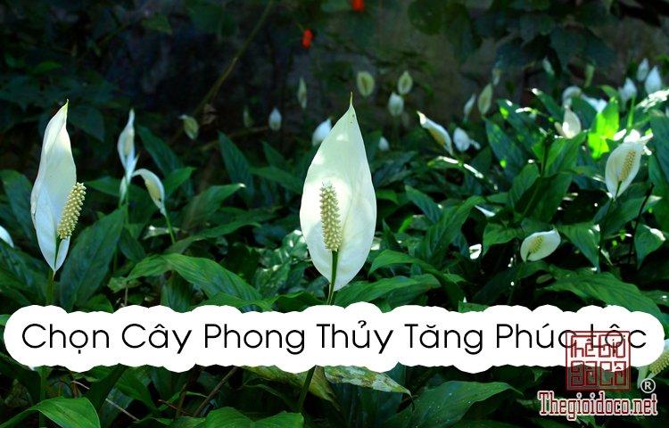 Phong Thủy - Chọn cây phong thủy tăng phúc lộc cho 12 chòm sao  (10).jpg