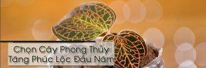 Phong Thủy - Chọn cây phong thủy tăng phúc lộc cho 12 chòm sao  (12).jpg