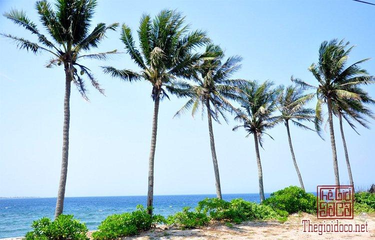 đảo Bé Lý Sơn (10).jpg