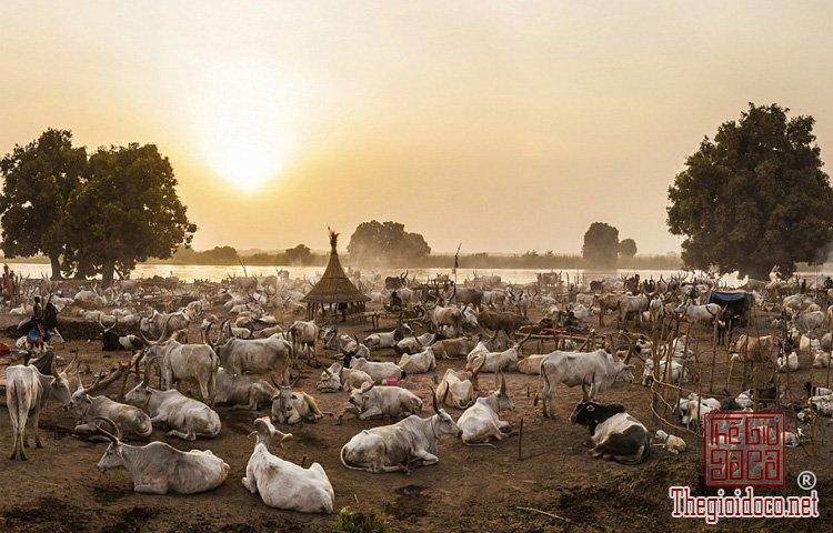 tộc Mundari ở Nam Sudan (7).jpg