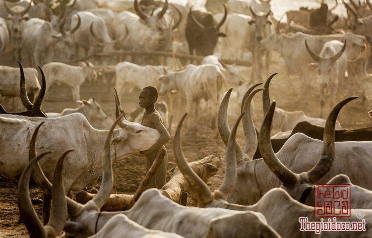 tộc Mundari ở Nam Sudan (12).jpg