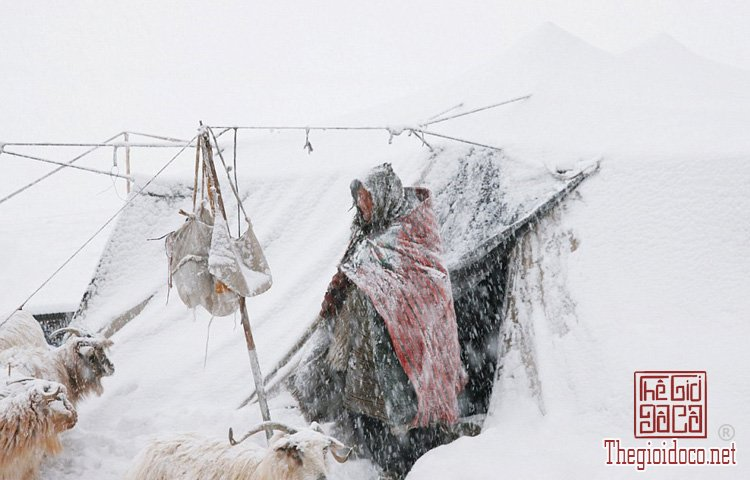 Người Chang Tang-Pa (12).jpg