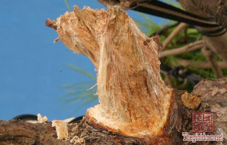 lam_canh_Jin - cành lũa trên bonsai (13).jpg