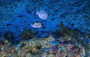 Vẻ đẹp của rạn san hô mới ở lưu vực sông Amazon