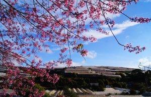Hẹn hò với những mùa hoa xuân trên khắp mọi miền Tổ quốc