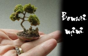Chia sẻ kinh nghiệm trồng cây bonsai mini