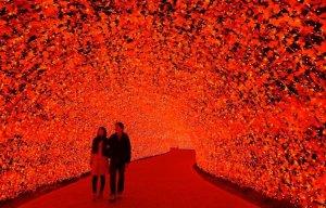 Lễ hội ánh sáng rực rỡ với 8 triệu bóng đèn LED ở Nhật