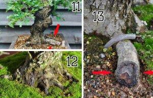 Kỹ Thuật tạo 2 rễ mới từ 1 rễ