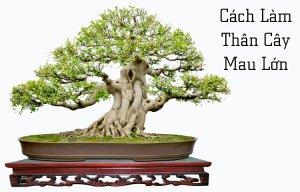 Làm sao cho thân cây mau lớn?