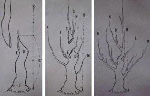 Kỹ thuật cắt giật cây cảnh - bonsai
