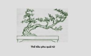 16 thế cây cổ truyền