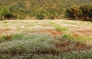 Du lịch Ninh Bình tham quan vườn hoa tam giác mạch – Phượt Ninh Bình