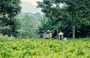 Thái Nguyên (4).jpg